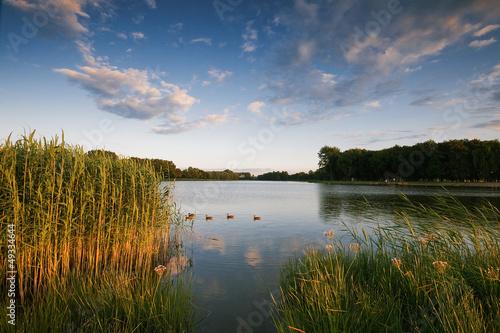 Fotografie, Obraz  Borki