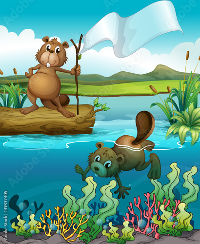 Canvas Prints River, lake Beavers in the river