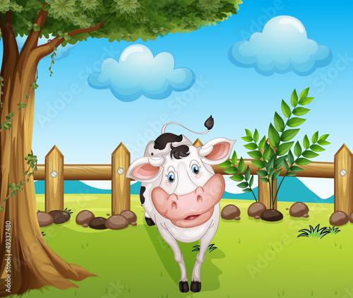 In de dag Boerderij A cow inside the fence