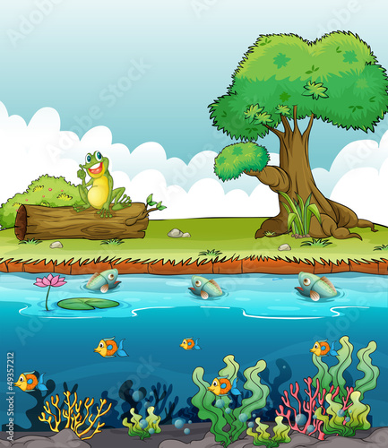 Canvas Prints River, lake A river and a smiling frog