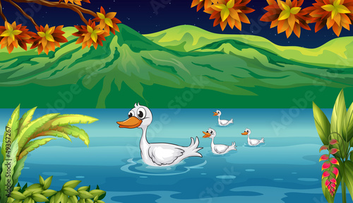 Ingelijste posters Rivier, meer The mother duck and her ducklings in the river