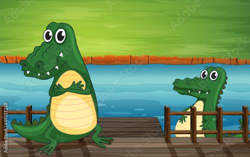 Canvas Prints River, lake Crocodiles in the bridge