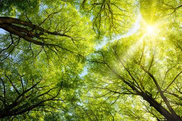 Obraz na Plexi Drzewa Sonnen leuchtet durch Baumkronen