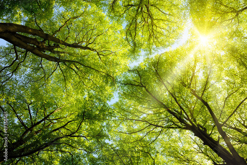 Sonnen leuchtet durch Baumkronen