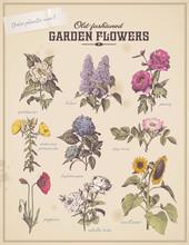 Florist's Placard With 9 Vintage Garden Flowers