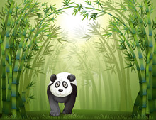A Panda Bear And A Bamboo Forest