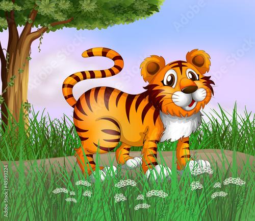 Foto op Aluminium Zoo A tiger and a beautiful nature