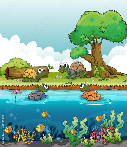 Poster de jardin Sous-marin A river and a smiling turtles