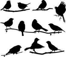 Silhouettes Bird On A Branch
