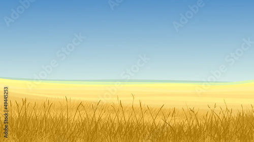 Field of yellow grass against blue sky. Fototapet