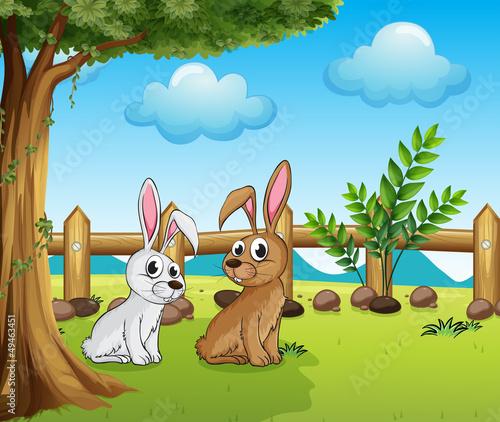 In de dag Boerderij Two bunnies inside the fence