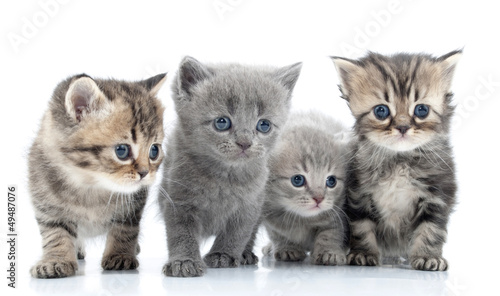 Portrait of young cats' group  . Studio shot. Isolated. #49487076