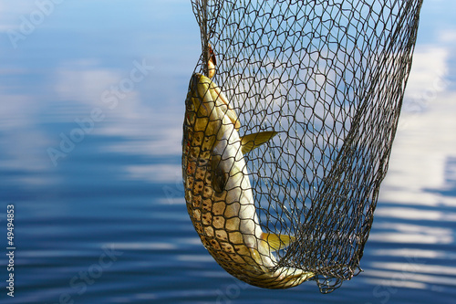 Tuinposter Vissen trout catch