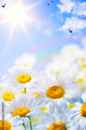 Foto-Duschvorhang - art floral spring or summer background (von Konstiantyn)