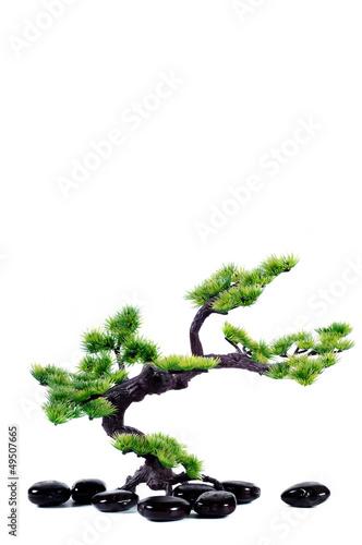 Spoed Fotobehang Bonsai Small tree in traditional Japanese style bonsai.