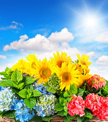 Fototapeta Inspiracje na lato colorful sunflowers and hortensia blossoms