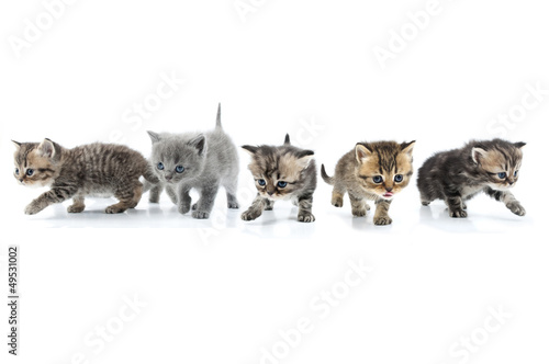 Group of kittens walking towards together. Studio shot. Isolated #49531002