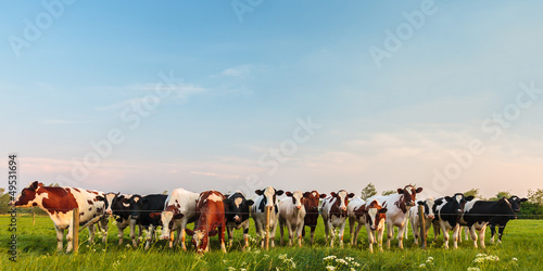 Fotobehang Koe Curious Dutch milk cows in a row