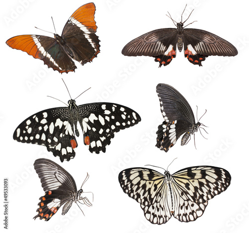 Fotografie, Obraz  set of  butterflies