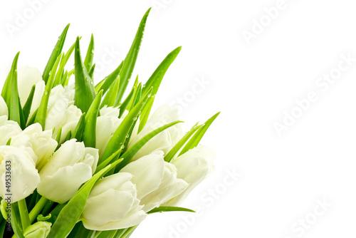 Tulipany - fototapety na wymiar