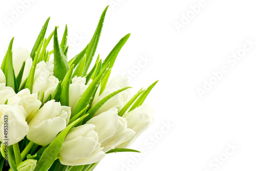 Obraz premium Tulipany