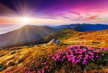 Fototapeta Optyczne powiększenie flower