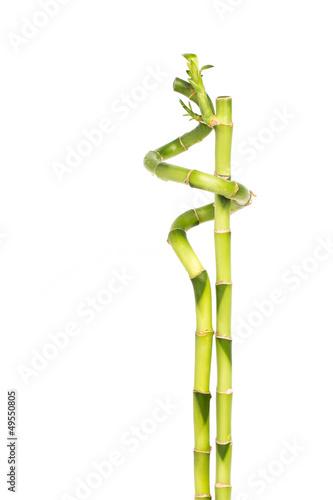 Plissee mit Motiv - Zwei Bambusstäbe eng umschlungen