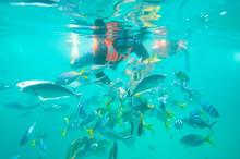 Diver Feeding Fishes In Tioman...