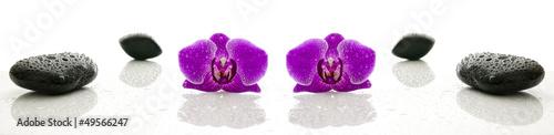 koncepcja-odnowy-biologicznej-dwa-fioletowe-storczyki-i-kamienie-zen-na-bialym-tle