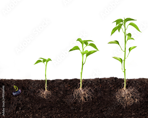 Tuinposter Planten plant growing