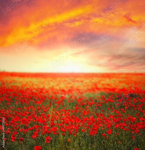 Fototapety, obrazy: Poppy field