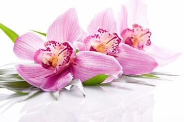 rosafarbene Orchideenblüte