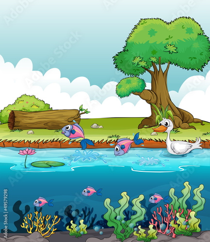 Ingelijste posters Rivier, meer Sea creatures with a duck