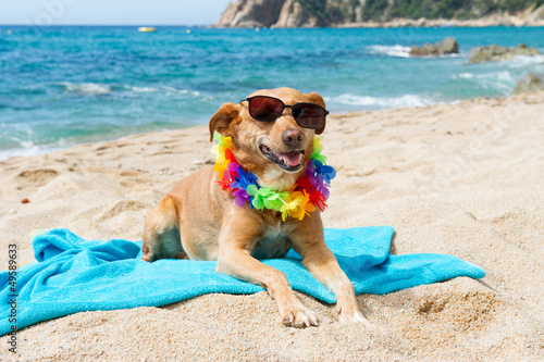 Relaxing dog at the beach Canvas Print