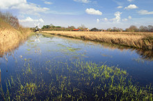 Fenland In Cambridgeshire, Eng...