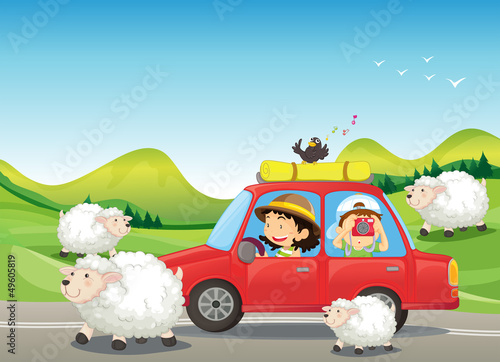 Poster de jardin Ferme The red car and the sheeps at the road
