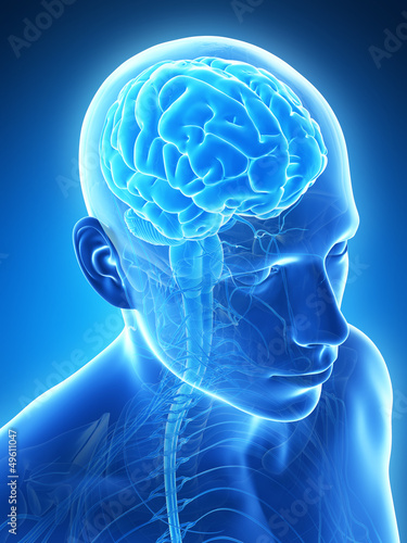 3d-odplacajaca-sie-ilustracja-meski-mozg