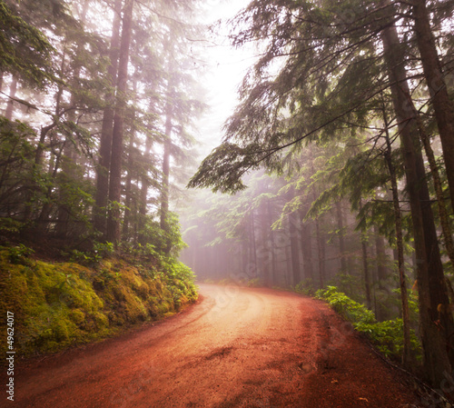 Aluminium Prints Forest in fog Forest