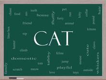 Cat Word Cloud Concept On A Blackboard