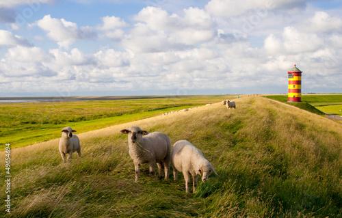 Poster Noordzee Schafe am Pilsumer Leuchtturm - Nordsee