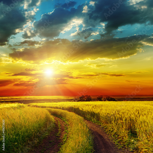 Poster Miel sunset over rural road near green field