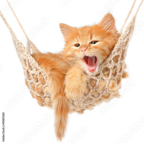 Papiers peints Chat Cute red-haired kitten in hammock