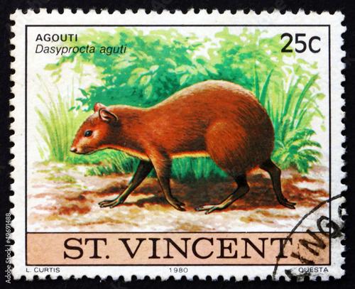 Photo Postage stamp Nicaragua 1980 Agouti, Dasyprocta Aguti, Animal