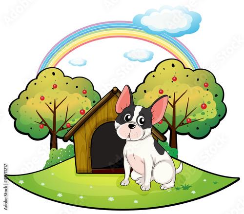 Foto auf Leinwand Hunde A dog beside a dog house