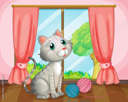 Foto-Lamellen (Lamellen ohne Schiene) - A cat near the window (von GraphicsRF)