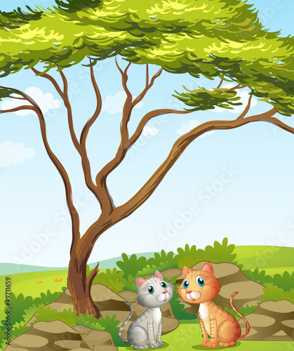 Deurstickers Katten Two cats in the forest