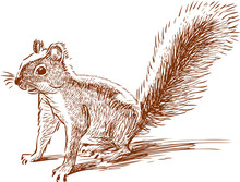 Funny Squirell