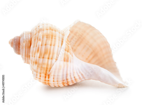 Canvas-taulu Seashell in close-up isolated on a white