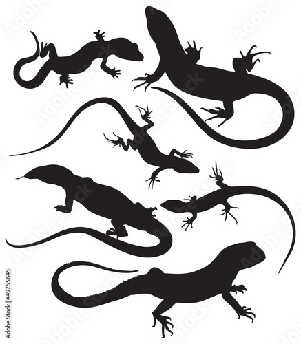 Fotomural vector lizards