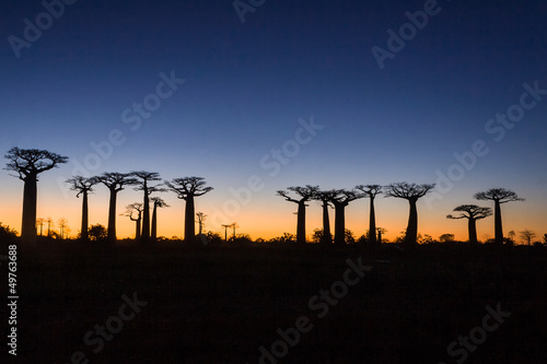 Deurstickers Afrika Sunset on baobab trees